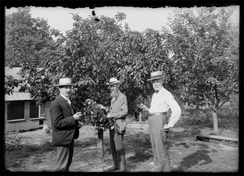 Fruit trees near poultry buildings, 1897-1912