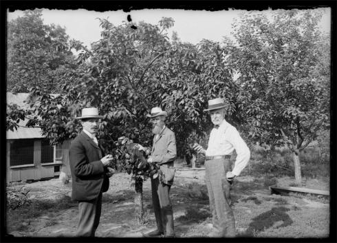 Fruit trees near poultry buildings, 1897-1912