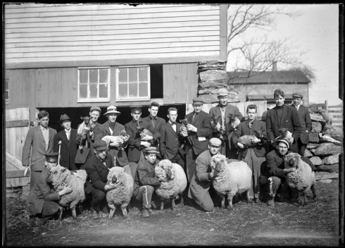 Judging sheep, 1912