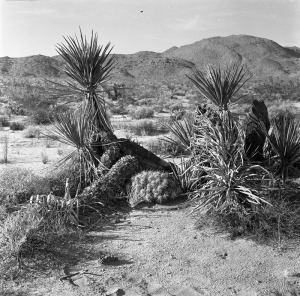 "Anza-Borrego Desert by Edwin Way Teale from his 1965 book ""Wandering Through Winter""."